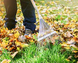 clear cut garden maintenance